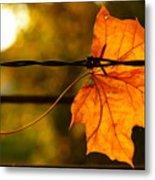 Barbed Autumn Metal Print