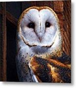 Barn Owl  Metal Print by Anthony Jones