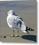Beach Bum Photograph Metal Print