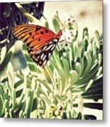 Beach Butterfly Metal Print