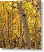Beautiful Fall Color In California Metal Print