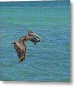 Beautiful Pelican In Flight Over The Water In Aruba Metal Print