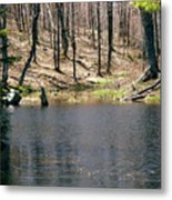 Beaver Pond Metal Print