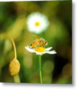 Bee On A Flower Metal Print