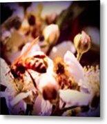 Bee On Apple Blossoms Metal Print