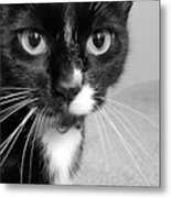 Bella The Cat Metal Print by Danielle Allard