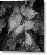 Bellevue Botanical Garden Leaves 6395 Metal Print