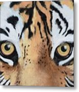 Bengal Eyes Metal Print