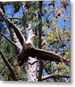 Berry College Eagle Mom Metal Print