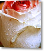 Bicolor Rose Metal Print
