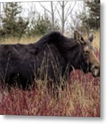 Big Mama Moose Metal Print