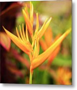 Bird Of Paradise Plant In The Garden. Metal Print