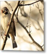 Bird On A Limb Metal Print