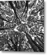 Black And White Nature Detail Metal Print