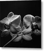 Black And White Orchids Metal Print