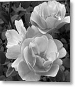 Black And White Roses 2 Metal Print