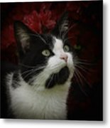 Black And White Tuxedo Cat Metal Print