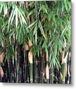 Black Bamboo Metal Print