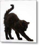 Black Kitten Stretching Metal Print