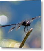 Black Spotted Dragonfly Metal Print