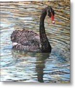 Black Swan On Water Metal Print