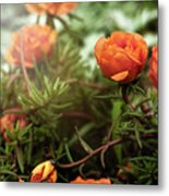 Blossomed Metal Print
