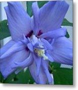 Blue Rose Of Sharon Metal Print