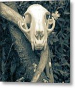 Bobcat Deer Antler Metal Print