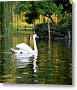 Boston Public Garden Swan Green Reflection Metal Print