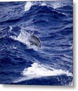 Bottlenose Dolphin Tursiops Truncatus Metal Print