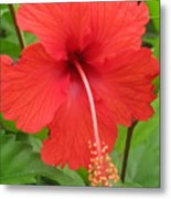 Bright Red Hibiscus Metal Print