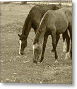 Brown Horses Grazing Metal Print