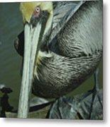 Brown Pelican At The Dock Of The Bay Metal Print