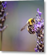 Bumblebee And Lavender Metal Print