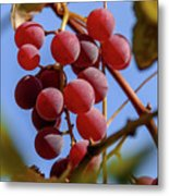 Bunch Of Grapes Metal Print