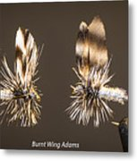 Burnt Wing Adams Metal Print