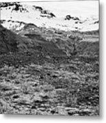 bushes and mosses growing on Skaftafell glacier end moraine Vatnajokull national park in Iceland Metal Print