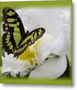 Butterfly On White Metal Print