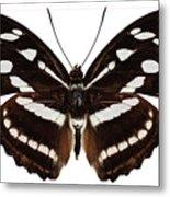 butterfly species Athyma reta moorei Metal Print