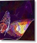 Butterfly Wings Insect Nature  Metal Print