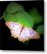 White Peacock Butterfly Wonderland A Series  Metal Print