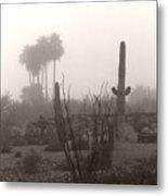 Cactus Fog Metal Print