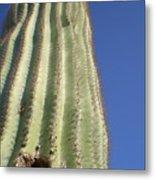Cactus IIi Metal Print