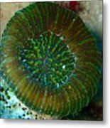 Cactus Ring Coral Metal Print