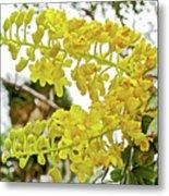 Caesalpinia Cacalaco In Huntington Desert  Gardens In San Marino-california  Metal Print
