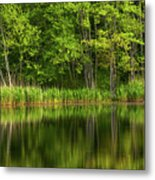 Calming Trees Metal Print