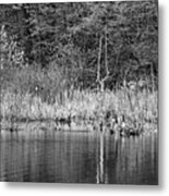 Canada Goose Couple Bw Metal Print