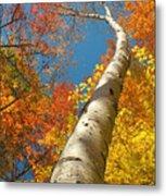 Canadian Autumn Metal Print