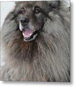 Canine Beauty Metal Print