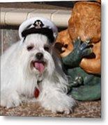 Captain Maltese Dog  Metal Print